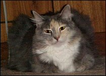 First picture of Chloe - 1999 at the farm