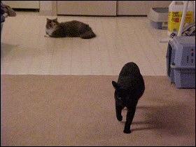 Chloe moves into Othello's territory - July 2000