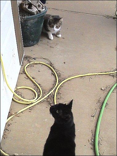 Oberon and Othello