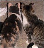 Olivia and Oberon
