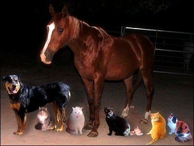 Earl's family portrait of critters - Xena, Chloe, Iago, Sultry, Othello, Olivia, Sampson, Gabby Cat