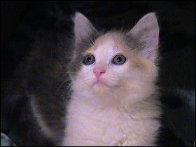 Our new kitten
