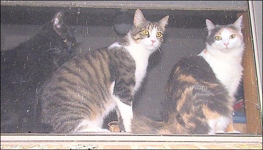 Othello, Oberon, Olivia