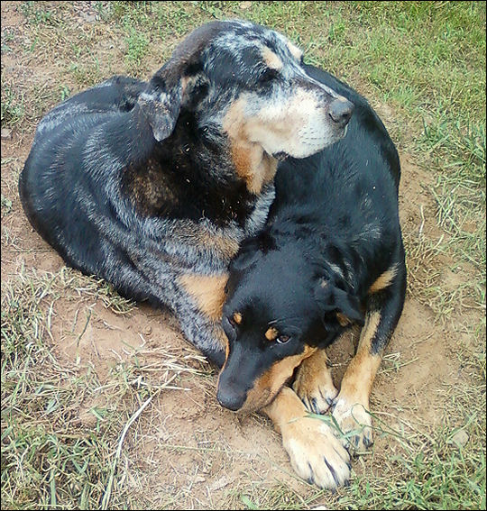 Xena and Gabby