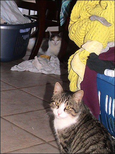 Oberon and Olivia