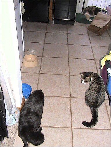 Oberon and Olivia and Othello