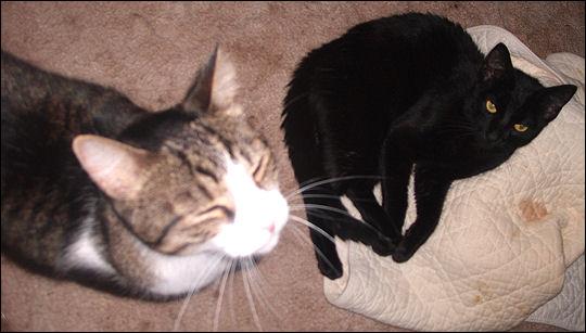 Obi and Puck