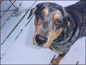 Xena doesn't like snow